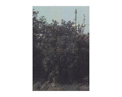 corradi-02.jpg